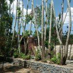 اجاره ویلای ساحلی و جنگلی در باغبهادران